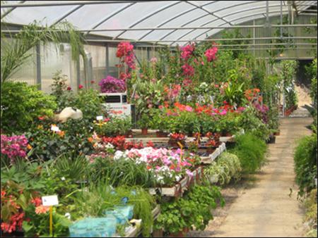 herramientas y accesorios de jardin